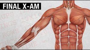 AX1:  The Final X-AM