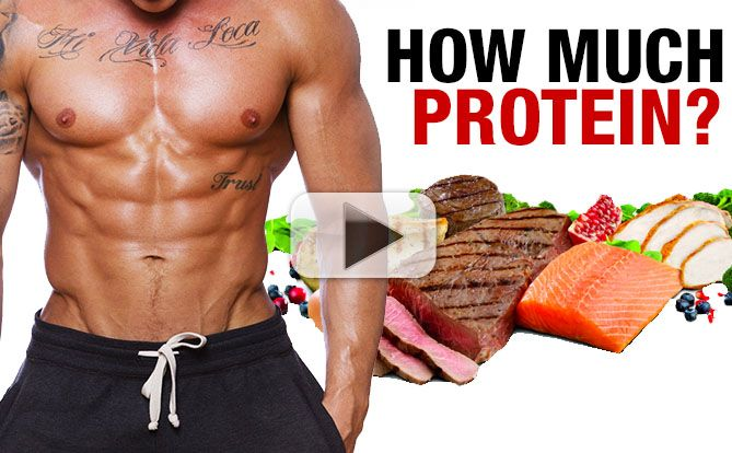 how-much-protein-absorption-at-each-meal-yt-pl