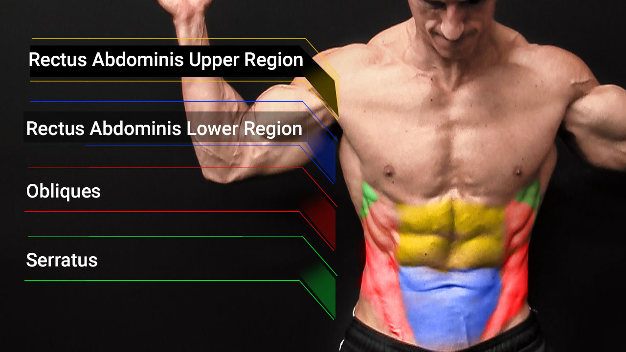 ab muscles anatomy including upper and lower rectus abdominis, obliques and serratus