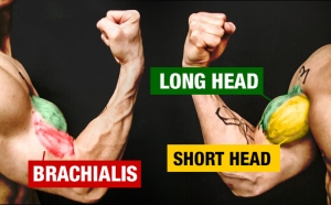 how to construct a complete biceps workout