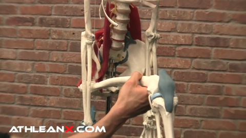 hip flexor shortens due to sitting