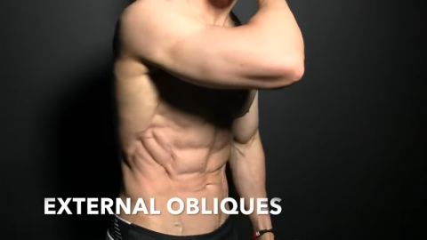 external obliques