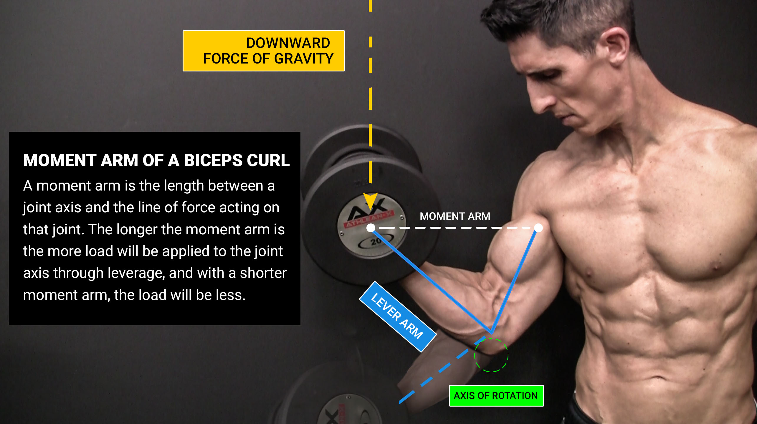 moment arm of a biceps curl with definition, downward force of gravity, lever arm and axis of rotation