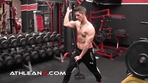 dowel bisecting biceps