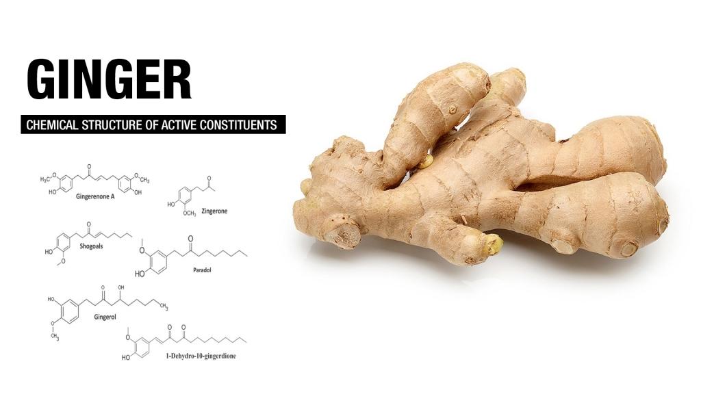 ginger for fat loss