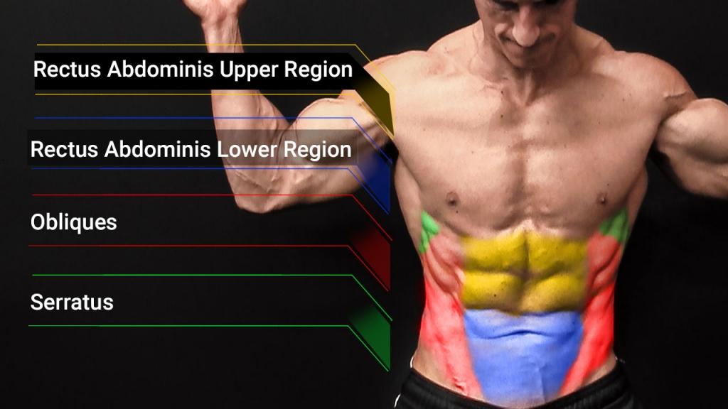abdominal muscles anatomy
