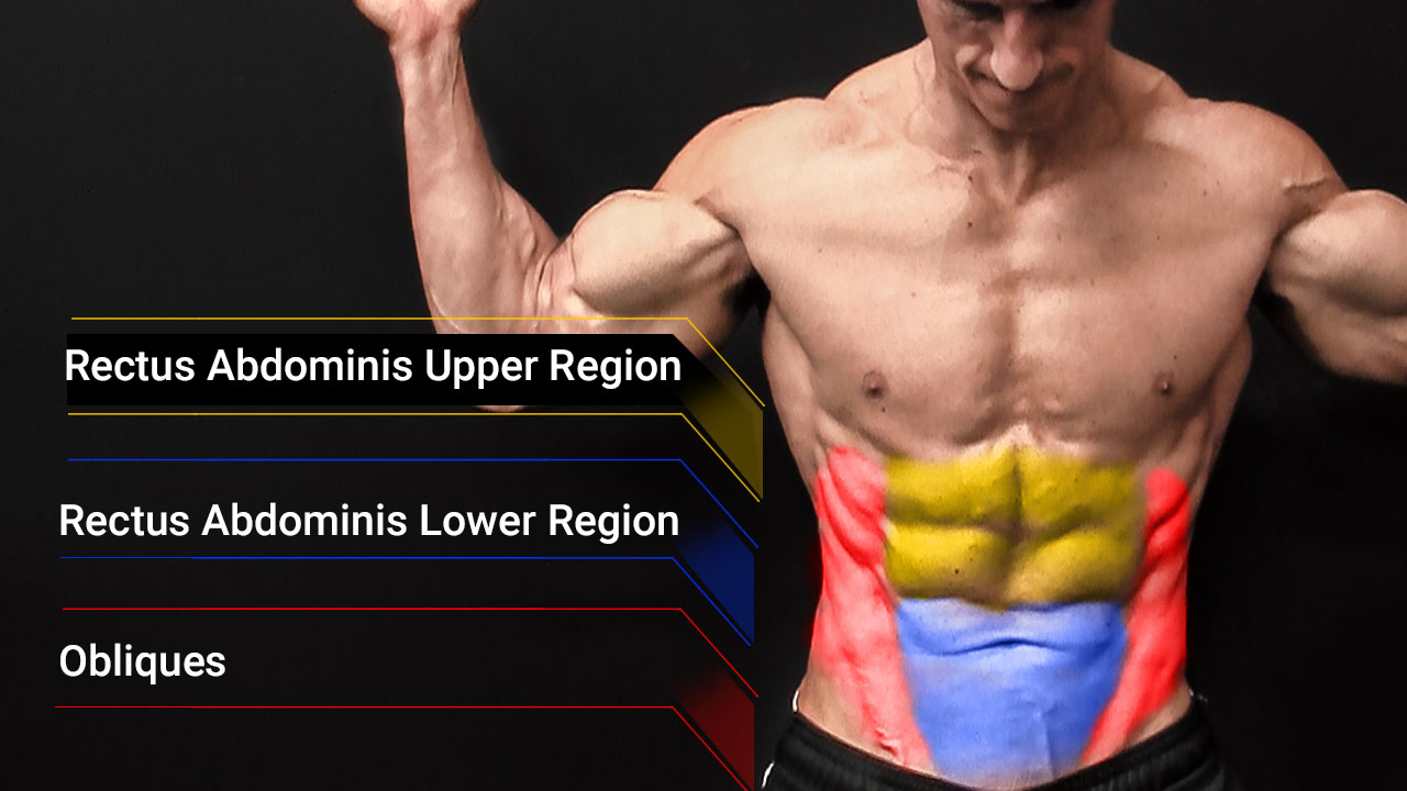 photo of abdominal muscle anatomy including upper and lower rectus abdominis and obliques