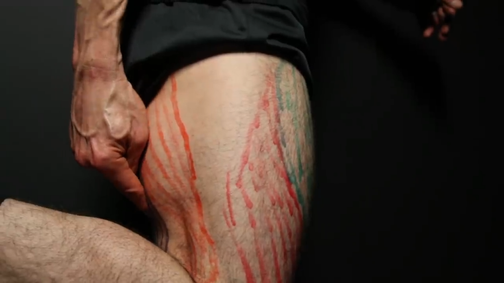 biceps femoris leg muscle