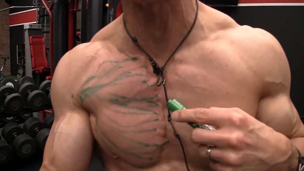 the chest muscle fibers originate from the clavicle