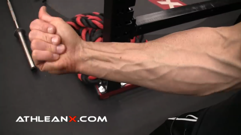 finger flexion function of the forearm