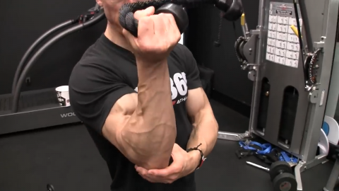 forearm supination muscles working