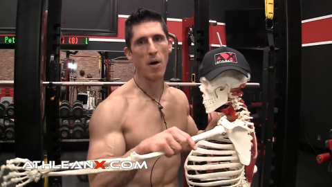 skeleton demonstrating the freedom of the ball and socket joint of the shoulder