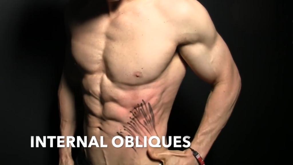 internal obliques muscles
