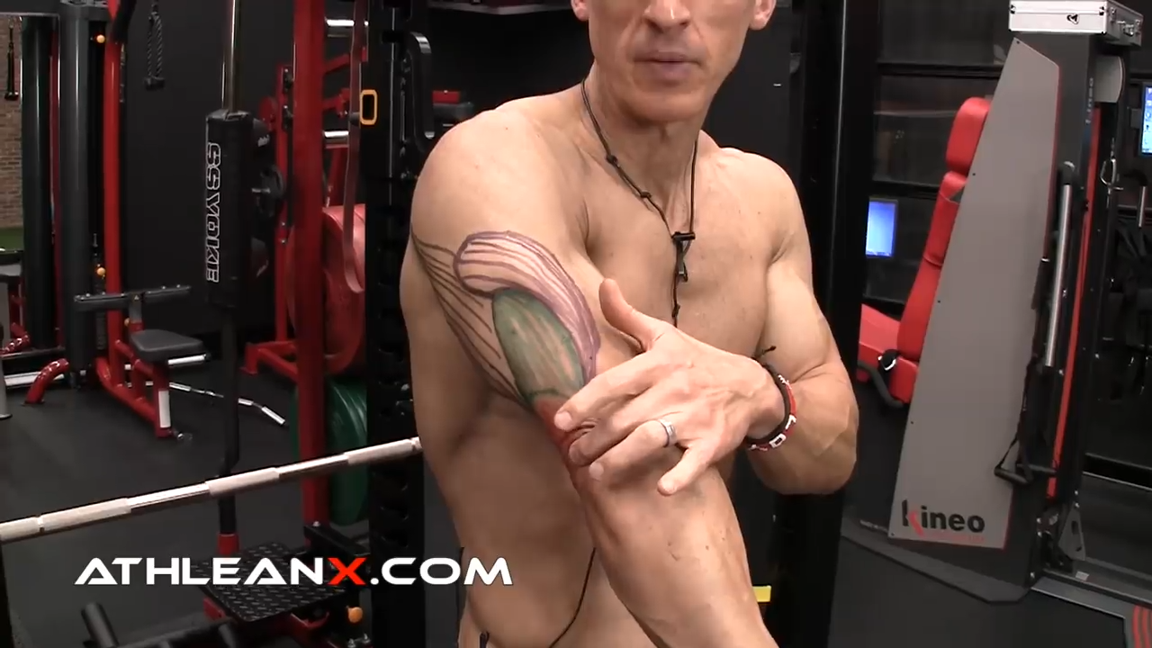 lateral and medial heads of the triceps influence only elbow extension