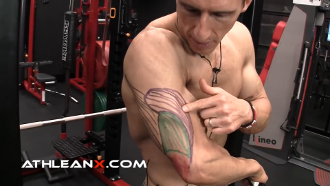 lateral head of the triceps
