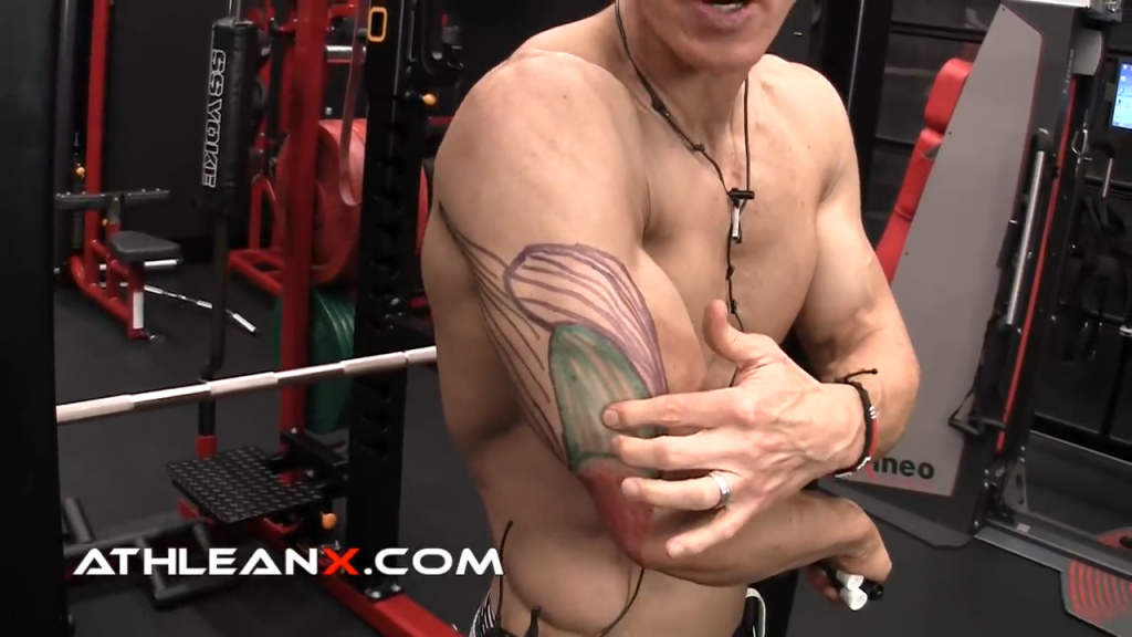 medial head of the triceps