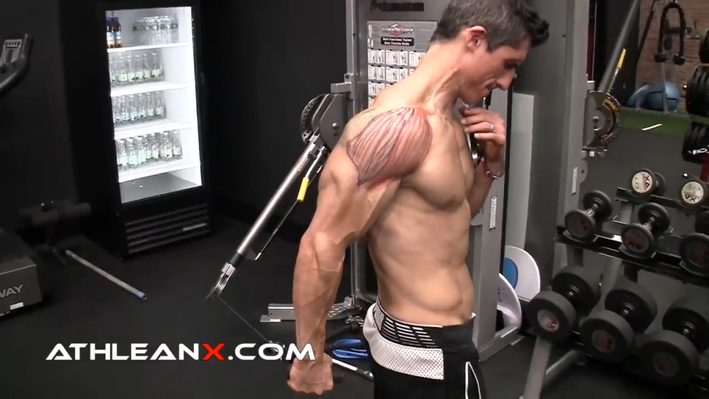 middle delt raise shoulder exercise