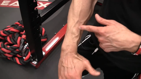 radial deviation function of the forearm