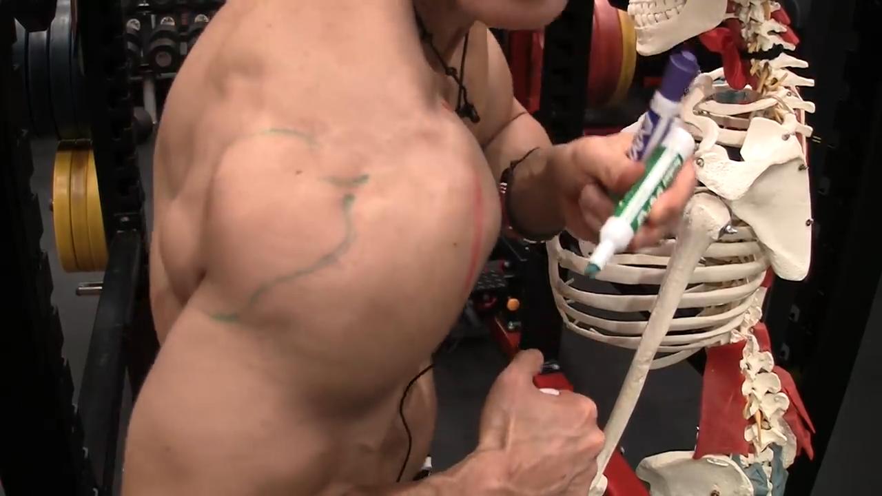 rear deltoid muscle