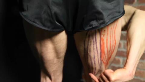 semitendinosis leg muscle