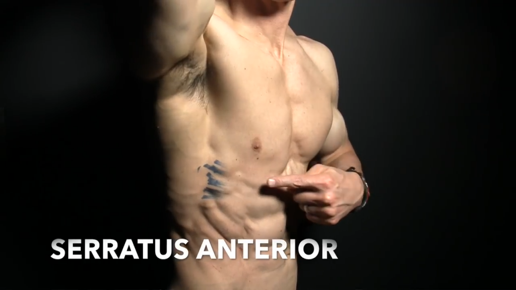 transverse abdominis muscle