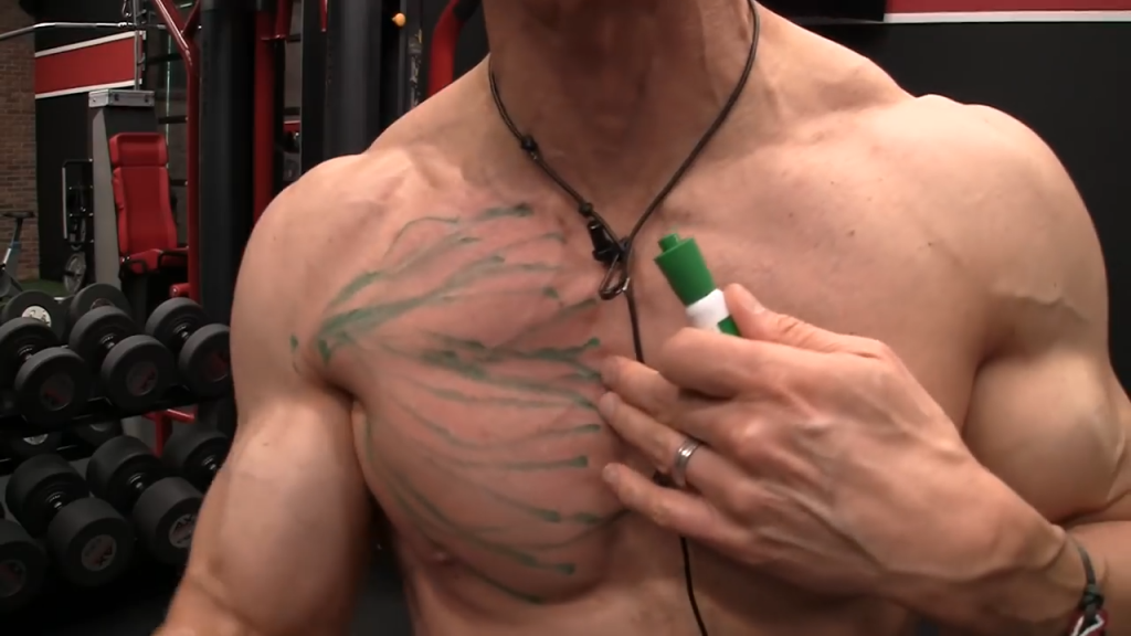 upper chest muscle fibers