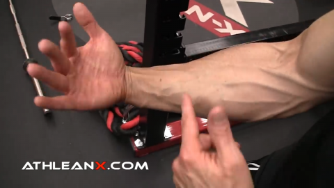 wrist flexion function of the forearm