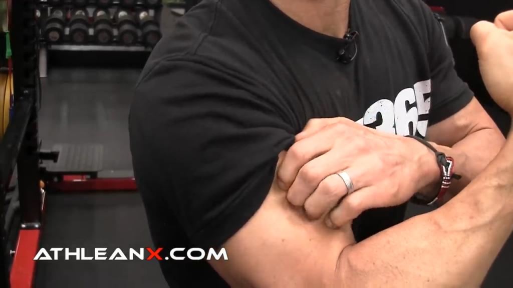 brachalis muscle biceps