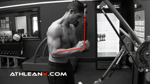 in the triceps pushdown when the cable is perpendicular to the forearm you have maximum tension