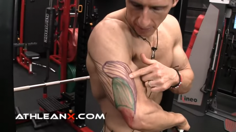 triceps lateral head