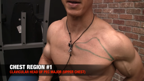 clavicular head of pec major