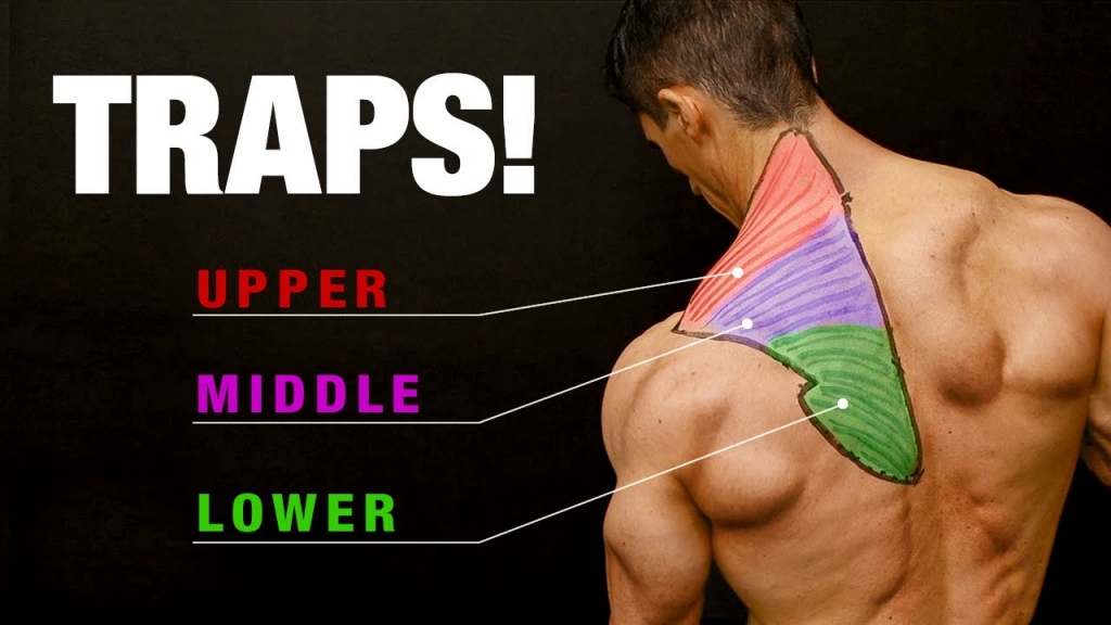 All About Traps (COMPLETE GROWTH GUIDE!)