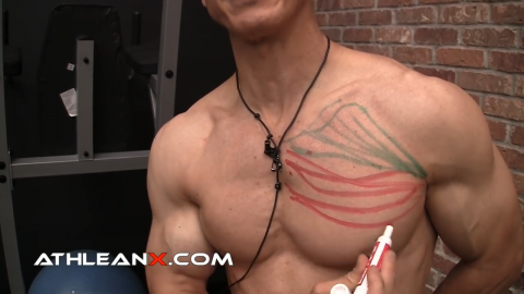 sternal portion of middle pectoral muscle