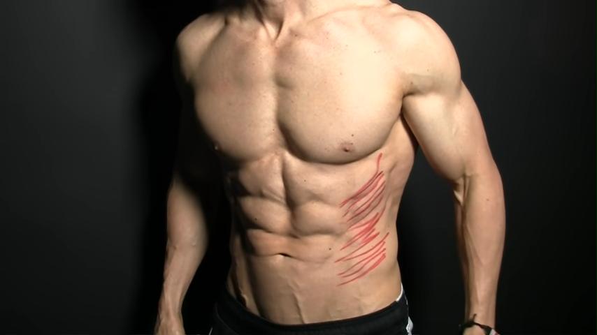 oblique muscle fibers