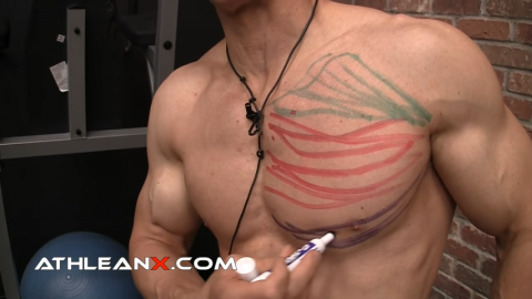 lower chest muscle